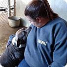 Adopt A Pet :: Winnie - Henderson, NC