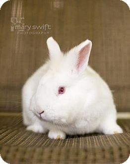 Other/Unknown Mix for adoption in Reisterstown, Maryland - Snowflake