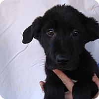 Adopt A Pet :: Chief - Oviedo, FL