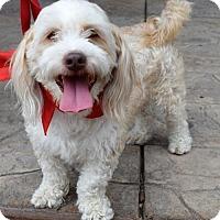 Adopt A Pet :: Bainan - Sacramento, CA