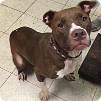 Adopt A Pet :: Doc - Cleveland, OH
