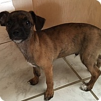 Adopt A Pet :: Trey - San Diego, CA