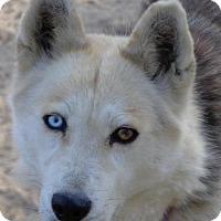 Adopt A Pet :: Lawton - Raleigh, NC