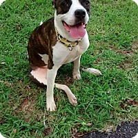 Adopt A Pet :: Angeline - Gainesville, FL