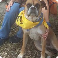 Adopt A Pet :: Rudy - Shallotte, NC