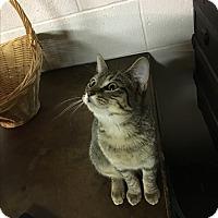 Adopt A Pet :: Jewel - Butner, NC