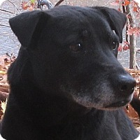 Adopt A Pet :: Chloe - Port Jervis, NY