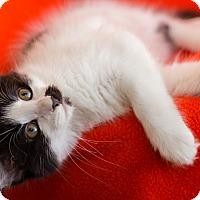Adopt A Pet :: Avery - Colorado Springs, CO