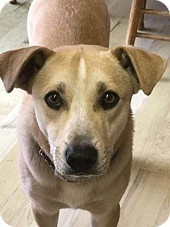 Australian Cattle Dog Mix Dog for adoption in San Jose, California - CJ