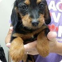Adopt A Pet :: Winchester - Centerville, GA