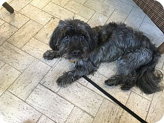 Small Dog Adoption West Palm Beach Fl