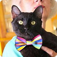 Adopt A Pet :: Sid: dog & cat buddy - Studio City, CA