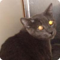 Adopt A Pet :: 328596 - Wildomar, CA