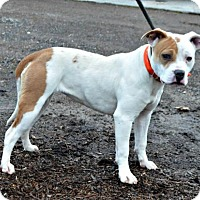 Adopt A Pet :: Lu - Yreka, CA