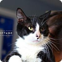 Adopt A Pet :: Mitch - Edwardsville, IL