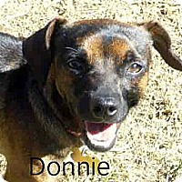 Adopt A Pet :: Donnie - San Jose, CA
