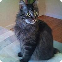 Adopt A Pet :: Claude - Modesto, CA