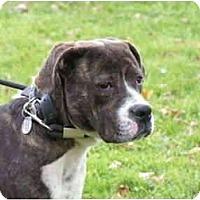 Adopt A Pet :: Sonny - Rigaud, QC