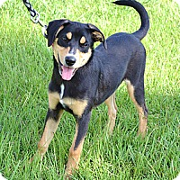 Adopt A Pet :: *Gemma - PENDING - Westport, CT