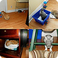 Adopt A Pet :: Lola - North Gower, ON