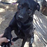 Adopt A Pet :: Inca - San Diego, CA