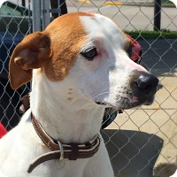 Adopt A Pet :: Tillie - Green Bay, WI