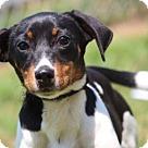 Adopt A Pet :: Bliss
