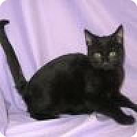 Adopt A Pet :: Loki - Powell, OH