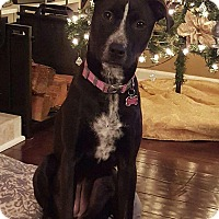 Adopt A Pet :: Lola - North Bend, WA