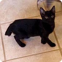 Adopt A Pet :: Hampton - Gainesville, FL