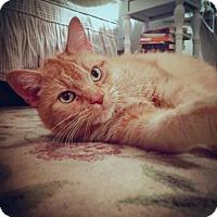 Adopt A Pet :: Kassie - Toronto, ON