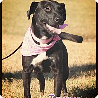 Adopt A Pet :: Jenny - Groton, MA