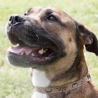 Adopt A Pet :: Josie - Sarasota, FL