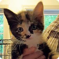 Adopt A Pet :: Mischief - Knoxville, TN