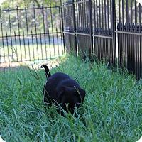 Adopt A Pet :: Skipper - Weeki Wachee, FL