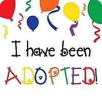 Adopt A Pet :: Penne - Alexandria, VA