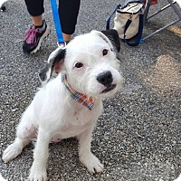 Adopt A Pet :: Poppy Mae - New Oxford, PA