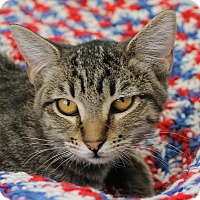 Adopt A Pet :: Thyme - Mountain Center, CA