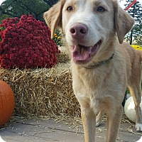 Adopt A Pet :: Comet - Oakland, MI