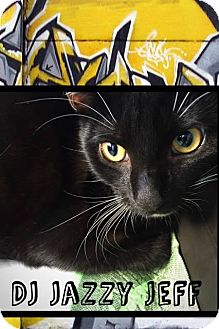 Domestic Shorthair Cat for adoption in Mansfield, Texas - DJ Jazzy Jeff
