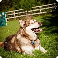 Adopt A Pet :: KIMA - Seattle, WA