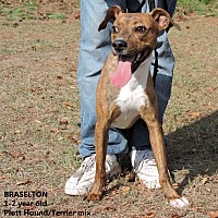 Adopt A Pet :: Braselton - Washington, GA