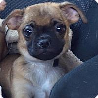 Adopt A Pet :: Stimpy - Gardena, CA