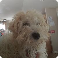 Adopt A Pet :: Chanel - Lemoore, CA