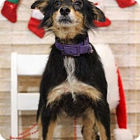 Adopt A Pet :: Kaela ADOPTION PENDING - Waldorf, MD