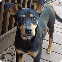 Adopt A Pet :: Copper(28 lb) GREAT Family Pet - West Sand Lake, NY