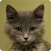 Adopt A Pet :: Fuzz - Hastings, NE