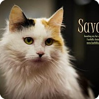 Adopt A Pet :: Savana - Scottsdale, AZ