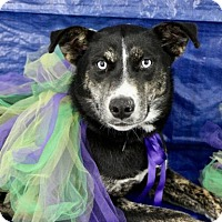 Adopt A Pet :: Sarah - Picayune, MS