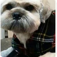 Adopt A Pet :: Deacon - Thousand Oaks, CA